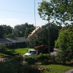 Emergency Tree Removal (2)
