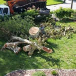 Emergency Tree Removal (3)