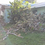 Emergency Tree Removal (6)